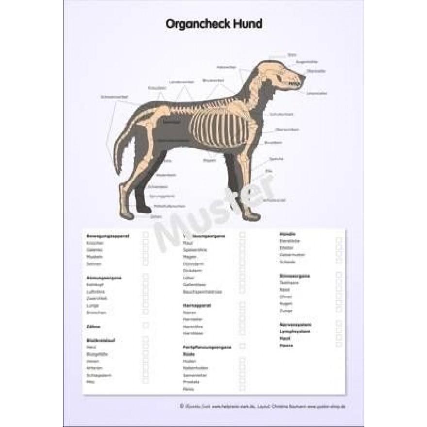 schautafel organcheck hund ypsilon shop produkte f r die. Black Bedroom Furniture Sets. Home Design Ideas